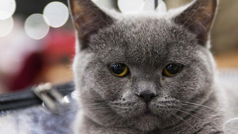 Пушистый гороскоп: какой вы кот по знаку зодиака?