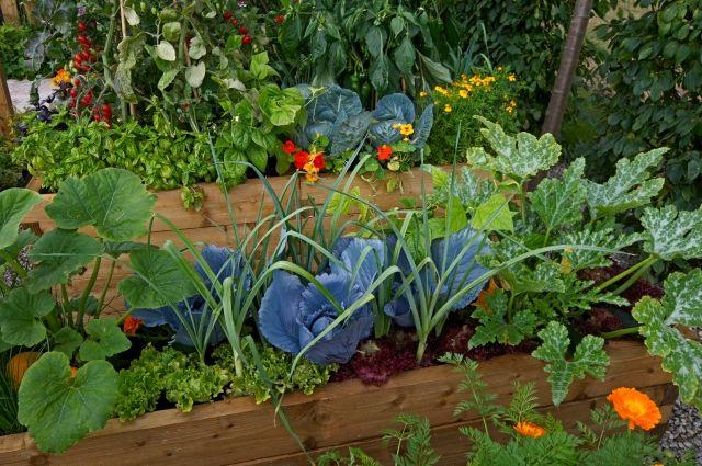 Простые и удивительные грядки: 5 видов лучших огородов