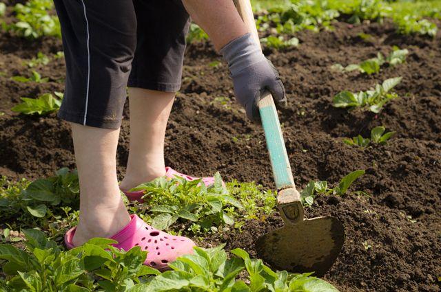 Огород для ленивых. Семь способов облегчить работу на даче