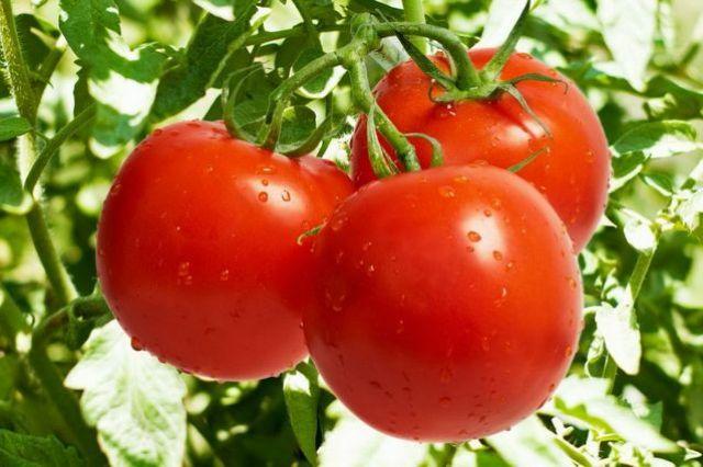 Пасынкования томатов. Техника обрезки в зависимости от типа ветвления
