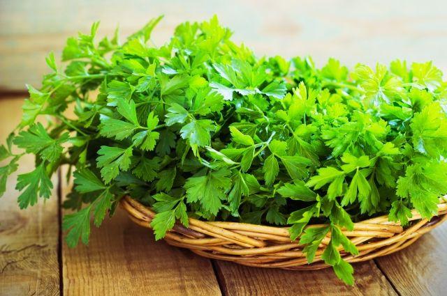 Расти петрушка листовая и корневая. Как получать урожай зелени весь сезон?
