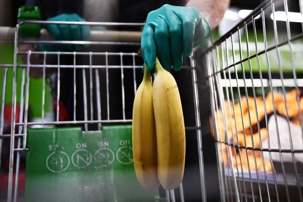 Мир может остаться без бананов из-за гриба в почве