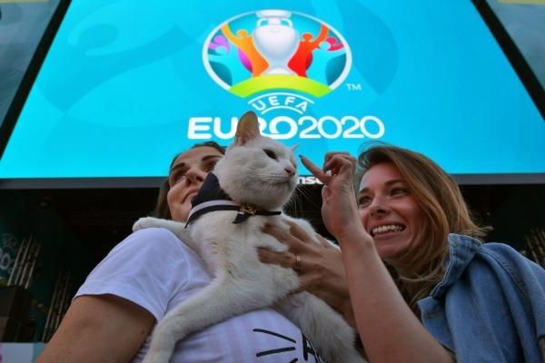 Кот Ахилл предсказал победу Бельгии над Финляндией на Евро-2020