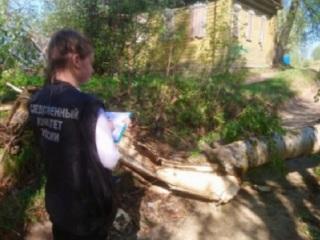 Ребенка убило упавшим деревом, Следком возбудил дело