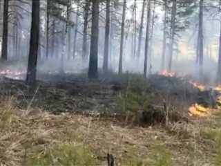 Лесной пожар в Челябинской области: огонь подошел к жилым домам