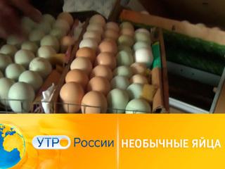 Утро России. В Смоленской области куры несут зеленые яйца