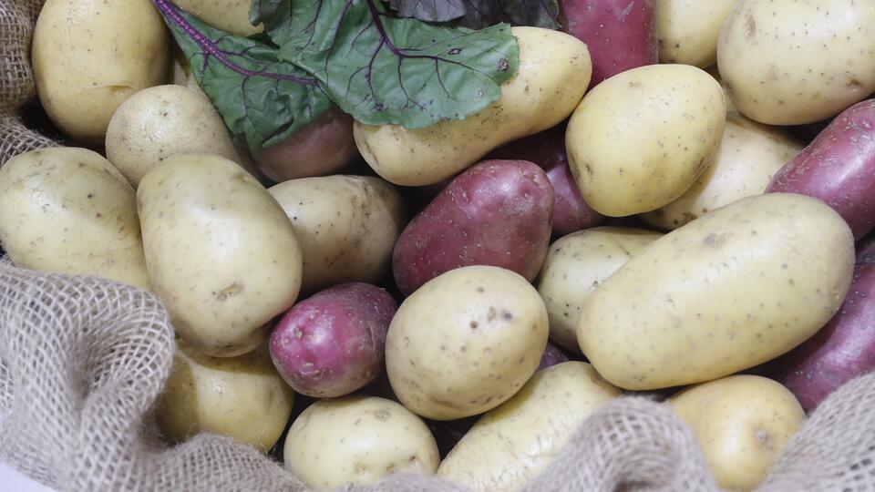 Убивает, лечит и заменит пластик: какие тайны скрывает картофель