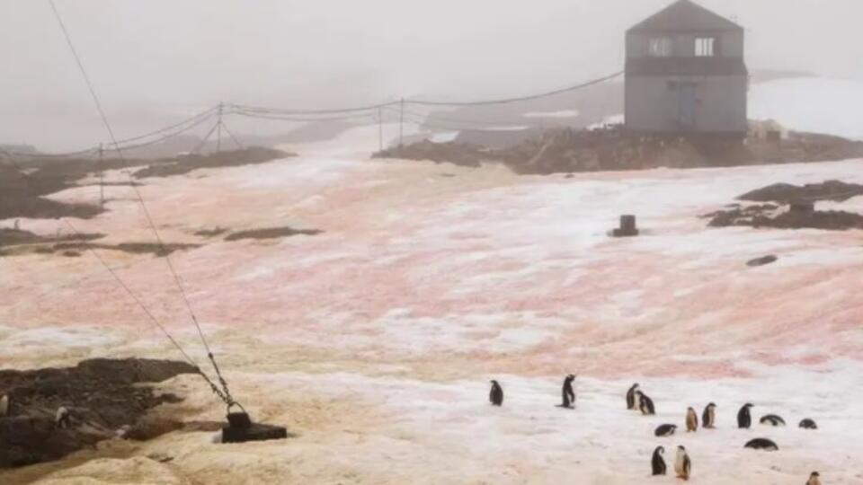 Украинские ученые обнаружили в Антарктиде розовый и зеленый снег