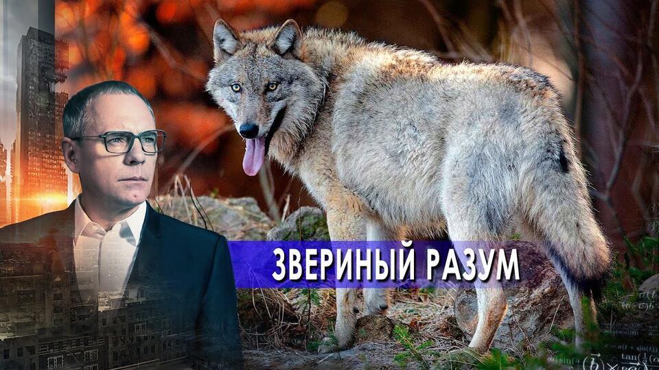 Звериный разум. Самые шокирующие гипотезы с Игорем Прокопенко (17.05.2021).