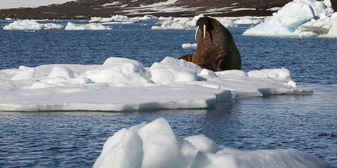 Ученые обеспокоены катастрофически быстрым таянием льда в Арктике