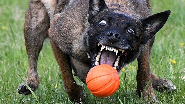 Опасная еда: 7 продуктов с вашего стола, которые нельзя давать собакам (Телеканал новин 24)