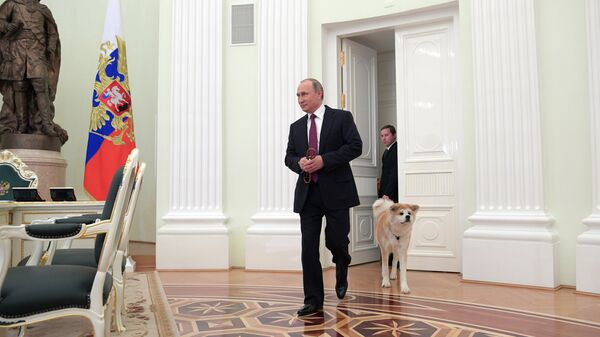 Японцев восхитил российский тренд, заданный Путиным