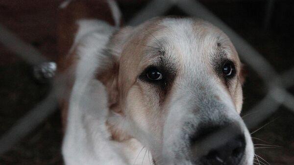 В Приморье ответили на сообщения о приманивании тигра собаками