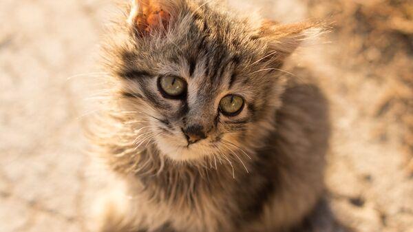 Названа смертельная для домашних животных ошибка хозяев