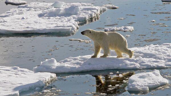 Спасенного белого медведя доставили из Якутии в Подмосковье