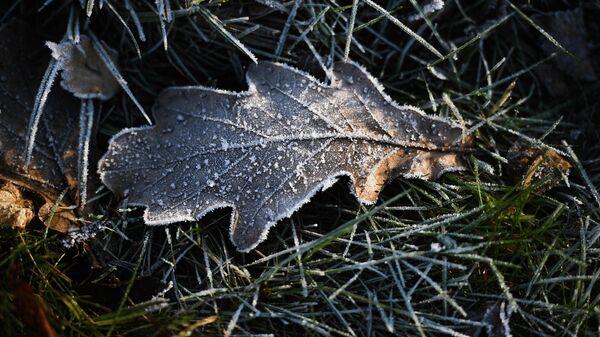 Вильфанд предупредил о заморозках в ряде регионов Европейской России