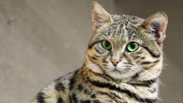 В Лондоне скоростной поезд задержали из-за кошки