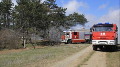 В России за сутки потушили 100 лесных пожаров