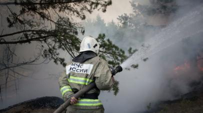 Абрамченко отметила позитивную динамику в борьбе с лесными пожарами в России