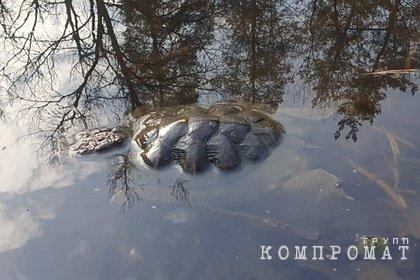 Массовая гибель черепах произошла в озере воронежского заповедника