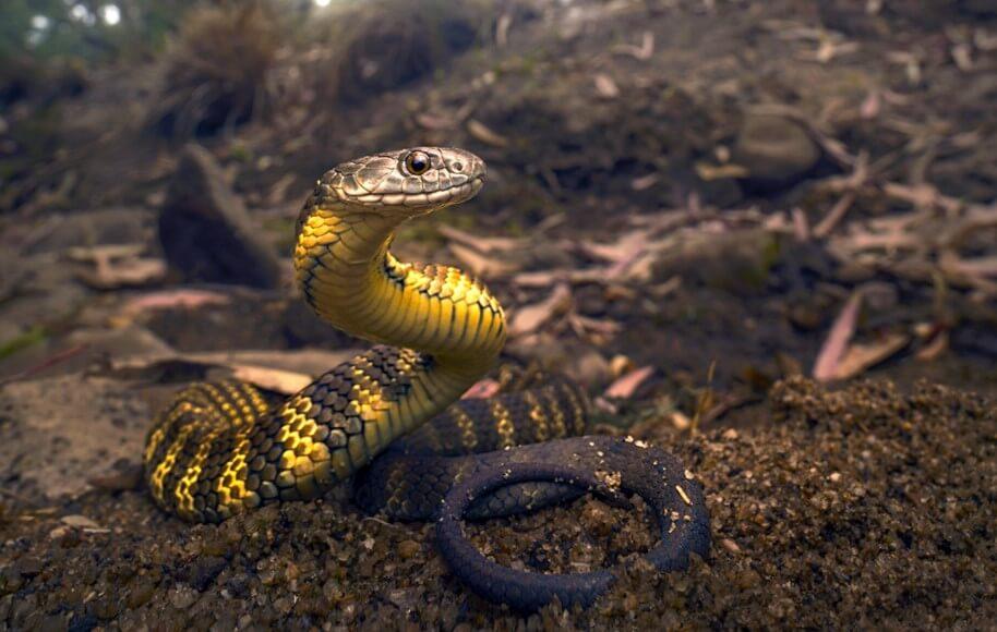 Люди могли быть такими же ядовитыми, как змеи. Но почему этого не произошло?