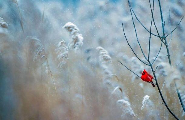 На День всех влюбленных Ленобласть ждет потепление