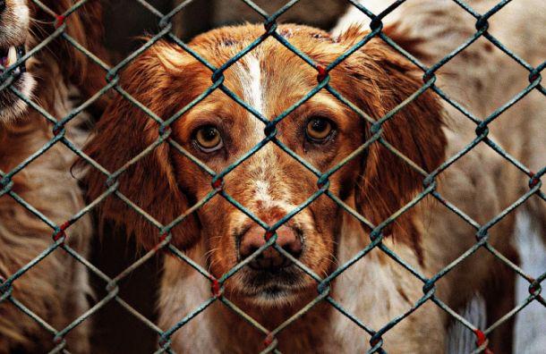 Беглов готов открыть в Петербурге два новых собачьих приюта