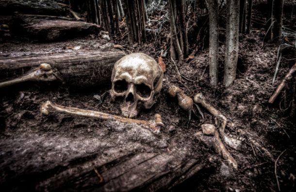 Под Выборгом обнаружили человеческий скелет