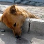 В Лермонтове выясняются обстоятельства массовой травли собак