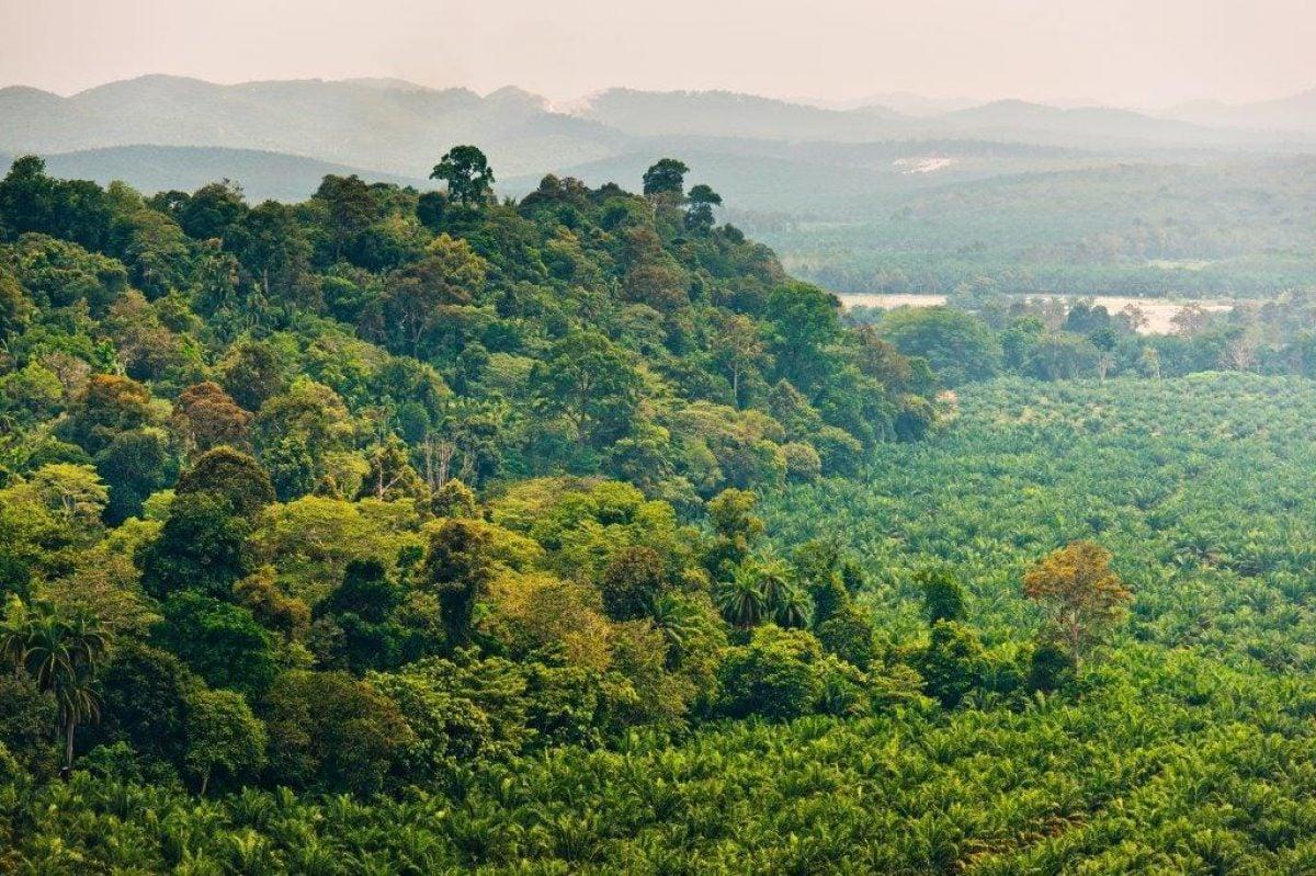 Ferrero подтверждает свои обязательства в рамках новой хартии по пальмовому маслу
