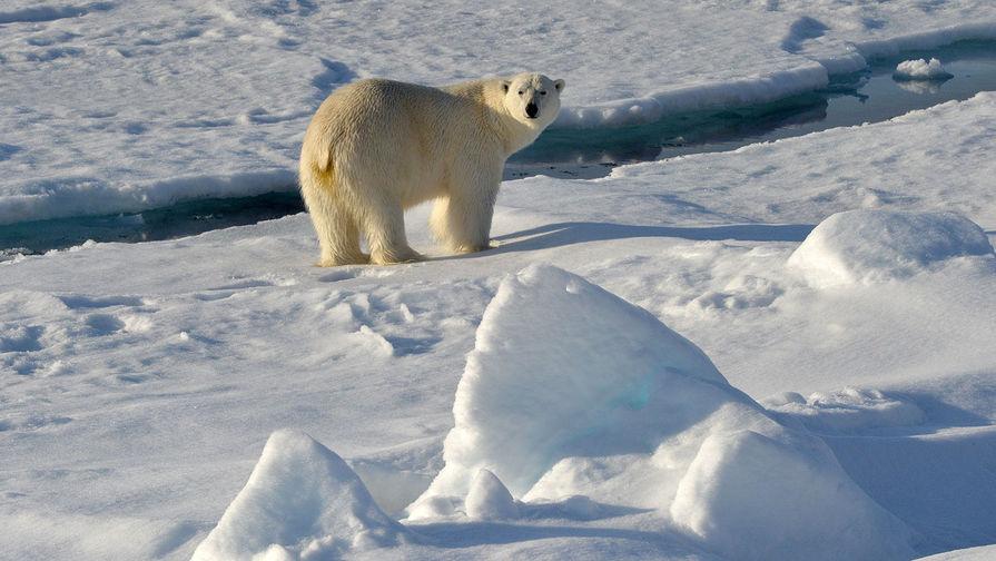 В Екатеринбургском зоопарке белый медведь Умка проглотил мячик и умер