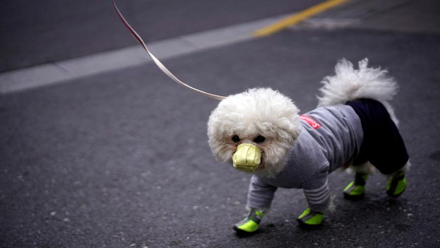 Стало известно, когда Россия представит вакцину от коронавируса для животных