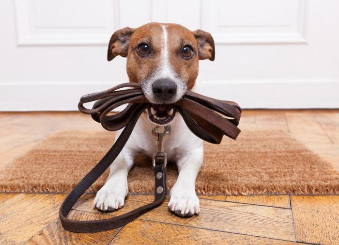 Выпил? Не выводи собаку гулять: новая инициатива от Совфеда
