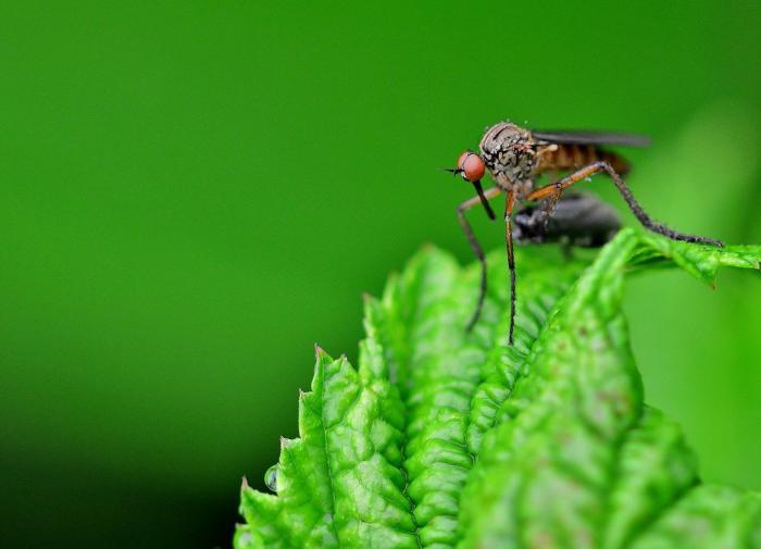 Энтомолог предупредил о надвигающемся нашествии комаров