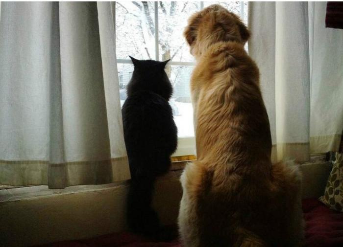 В Госдуму внесли проект об обязательной регистрации домашних животных
