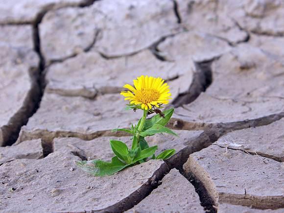 Российские регионы ждет летняя засуха