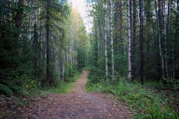 Мертвую женщину с проломленной головой нашли в подмосковном лесу
