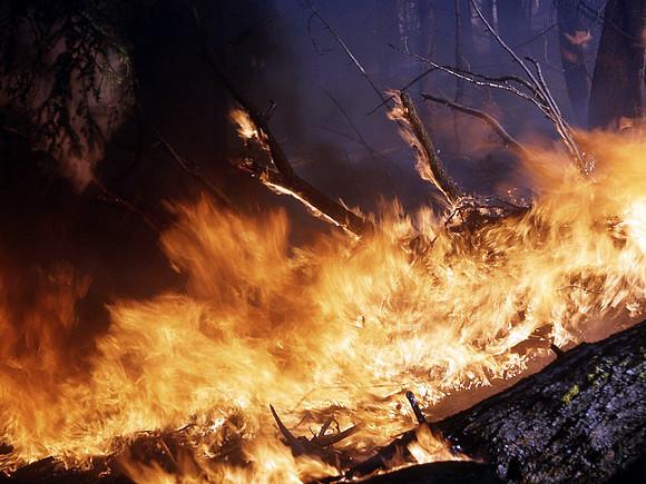 В Омской области из-за пала сухой травы загорелись пять дач