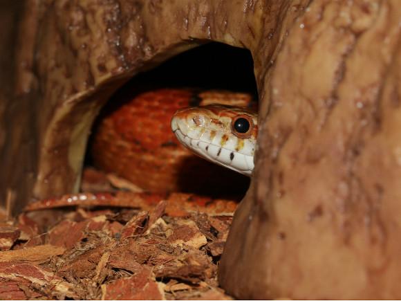 «Даже маленькие гадюшата ядовиты»: биолог объяснил, почему в Ленобласти встречается «аномально» много змей