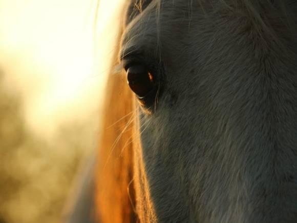 Алтайский полицейский расстрелял 8 лошадей и жеребенка