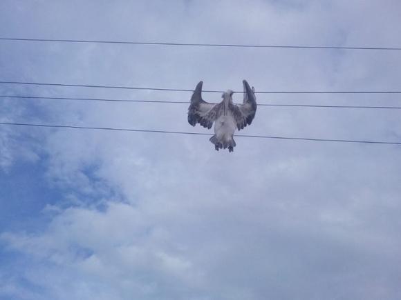Минприроды РФ назвало возможную причину массовой гибели краснокнижных пеликанов в Дагестане