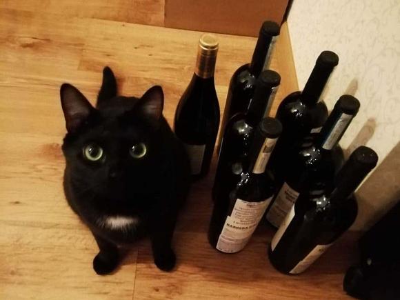 Ученые: Кошки умеют придумывать себе коробки