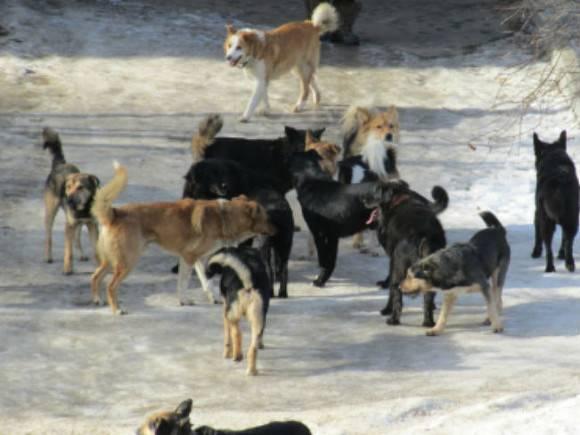 Брянский чиновник отделался условным сроком по делу о гибели трех женщин, которых растерзали собаки