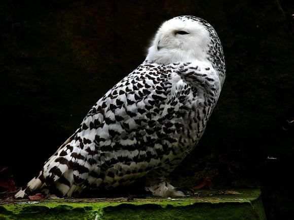 Ученые доказали вред попыток превратить «сову» в «жаворонка»