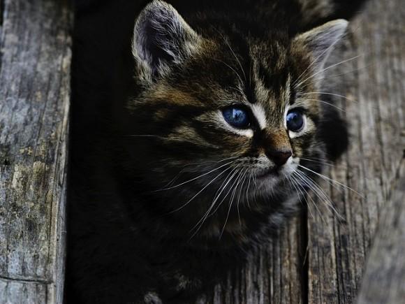 В Москве спасли котенка, застрявшего под капотом автомобиля