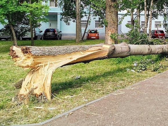Москвичей предупредили о сильном ветре 6 мая