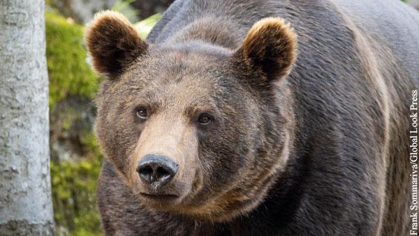 Принца Лихтенштейна заподозрили в убийстве самого большого медведя Европы