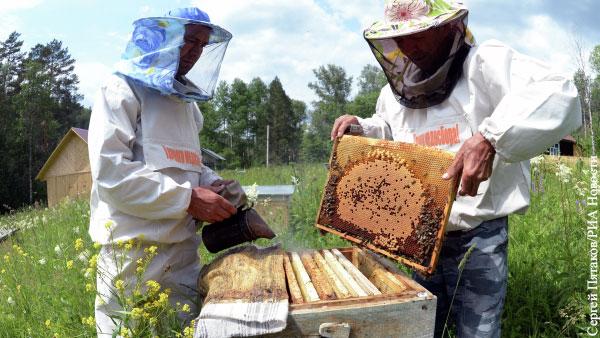 В Башкирии зафиксирована массовая гибель пчел