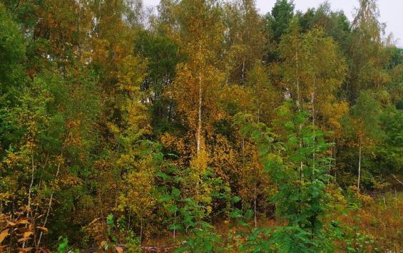 В администрации города рассказали, готов ли Курск к пожароопасному сезону