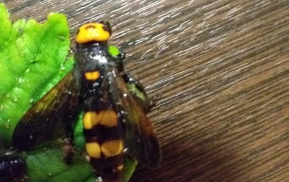 В центре Курска были замечены гигантские осы